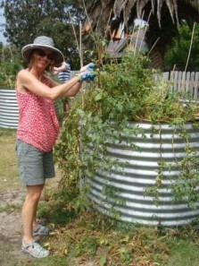 Julia trims and stakes our saggy tomatoes
