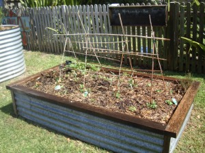 ...and after. OoooOOoo, I do love building a good trellis. Oh snowpeas, reach for the stars!